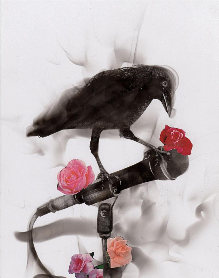 Oiseau_micro