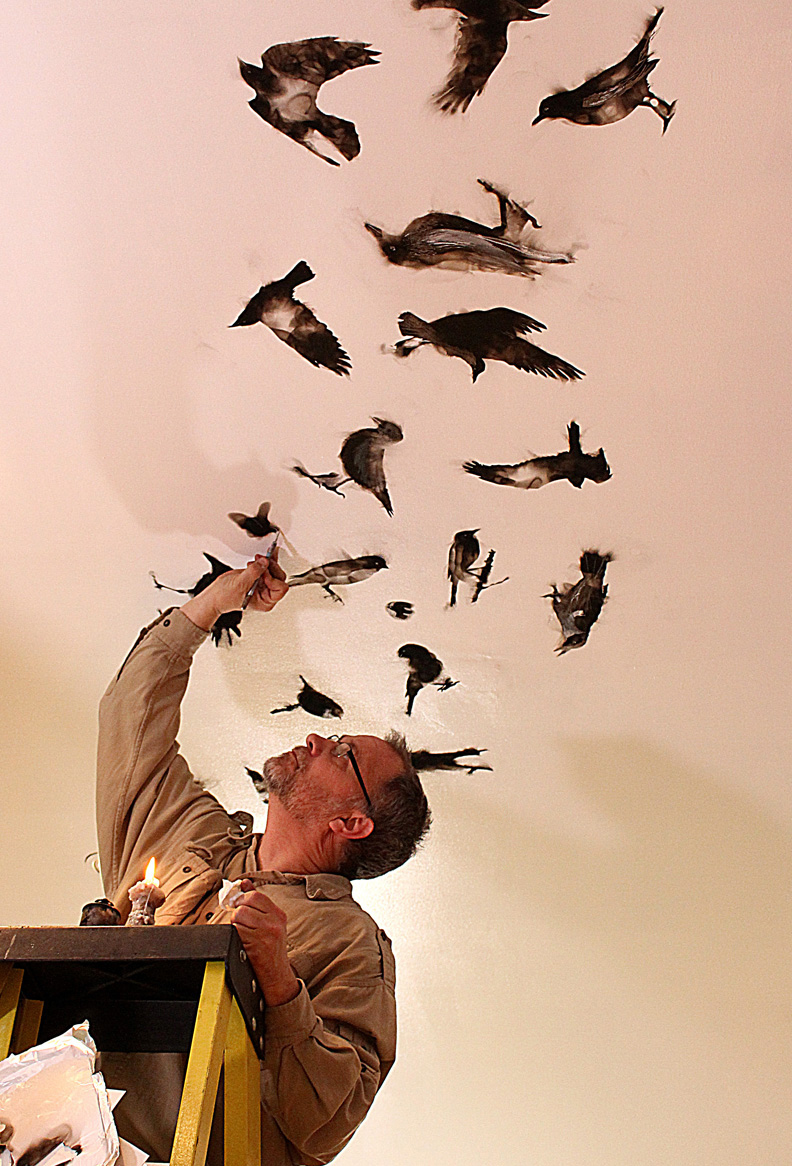 Steve peint oiseaux