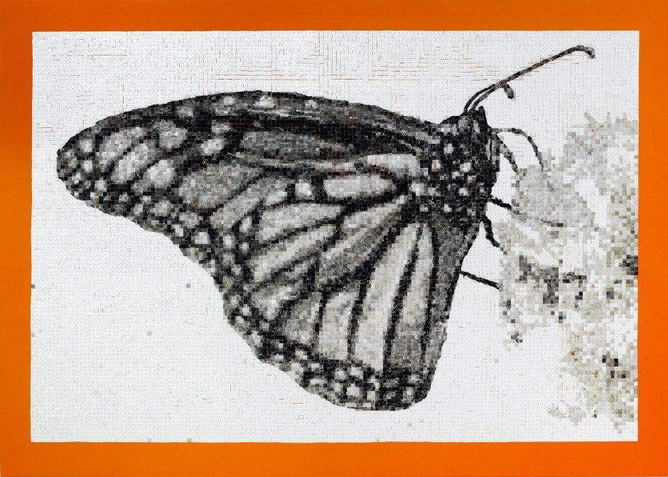6 tableau monarque